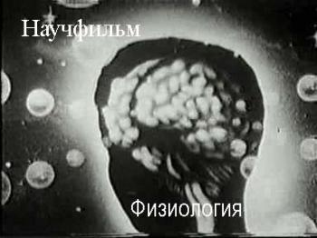 Анатомия физиология патология органов слуха речи реферат