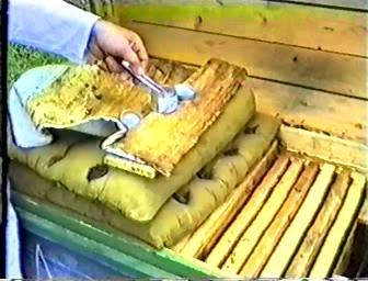 руководство для пчеловодов видео скачать