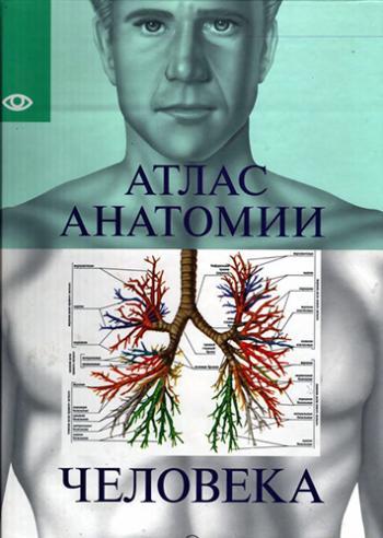 Атлас анатомии человека белый город скачать