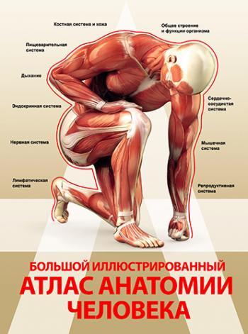 Атлас по анатомии человека неттер pdf
