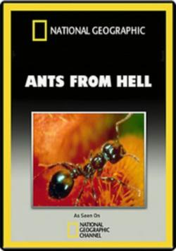 ants natures secret power Ants – nature's secret power bert hölldobler, the ant guru himself, takes you into  the life of many different species, thereby introducing you to.