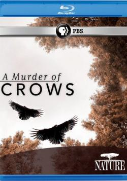 Воронья стая / A Murder of Crows VO